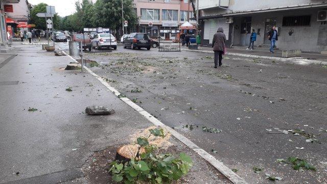 Јучерашња сеча стабала у главној улици нелегално изведена