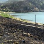 Ко је запалио растиње код обале на Бованском језеру?