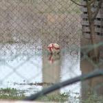 Zbog poplava vanredna situacija u 11 aleksinačkih sela