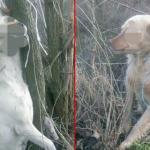 Uznemiravajuće zlostavljanje pasa kod Aleksinca: Žena na Božić zatekla jeziv prizor u dvorištu!