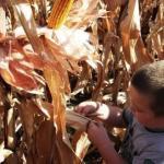 Težak položaj poljoprivrednika zbog suše, ali i države