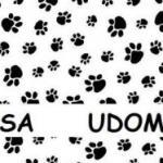 Akcija udomljavanja pasa i mačaka u Aleksincu