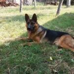 Урош је пронашао пса и вратио га власници из Алексинца