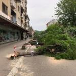 Gde su završila posečena stabla iz glavne ulice?