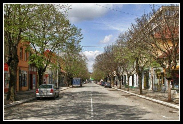 Грађани покренули петицију против сече дрвореда у главној улици