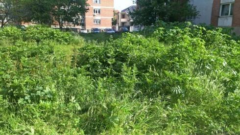 Džungla u centru grada