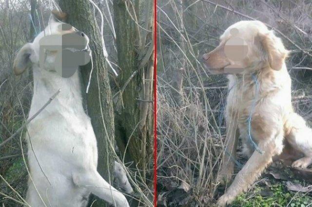 Узнемиравајуће злостављање паса код Алексинца: Жена на Божић затекла језив призор у дворишту!