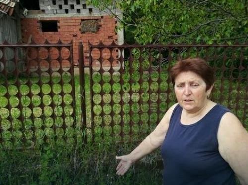 Ljiljana Ilić ispred objekta u kojoj su bili prasici koji su ukradeni