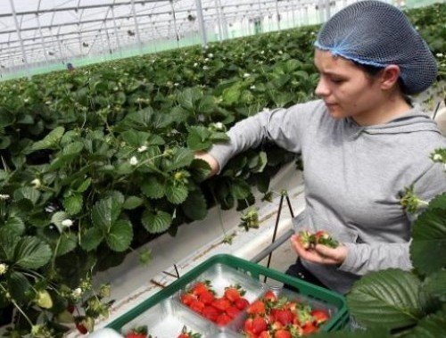 Едукација о хидропонској производњи јагода у пољопривредној школи у Алексинцу
