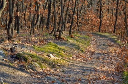 Светски дан шума биће обележен и у Алексинцу