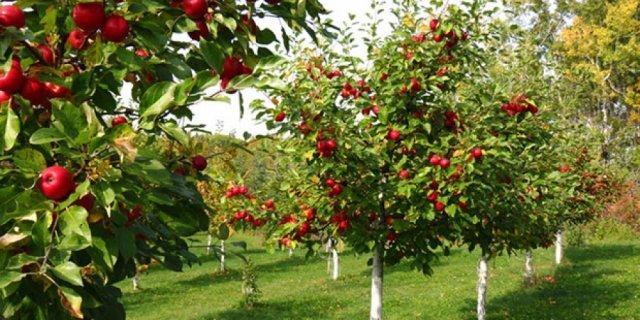 Subvencije za voćarsku i vinogradarsku proizvodnju