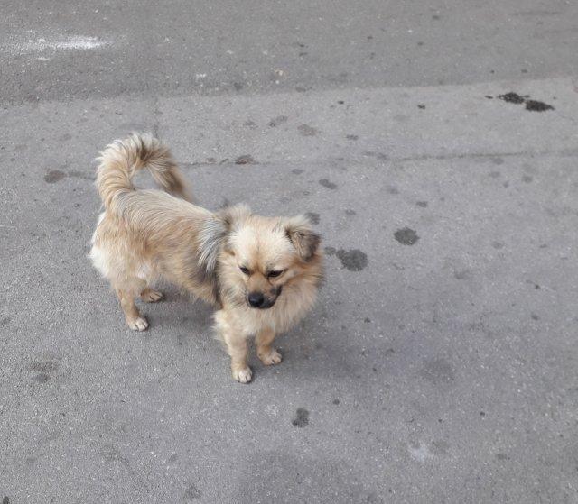 Napušten pas