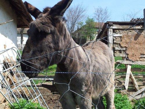 Farma magarića u Mozgovu