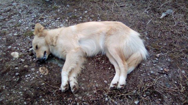 Ко трује псе у Алексинцу? (УЗНЕМИРУЈУЋЕ ФОТОГРАФИЈЕ)
