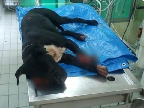 Пас преживео брутални напад