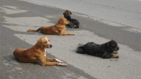 Опрез: напуштени пас код Цитроенке уједа пролазнике