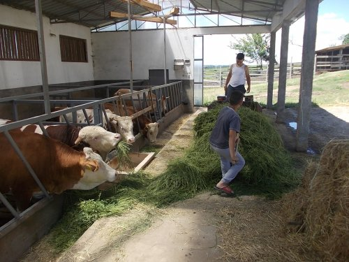 Инжењер пољопривреде Младен Крстић, живи у граду, ради на селу