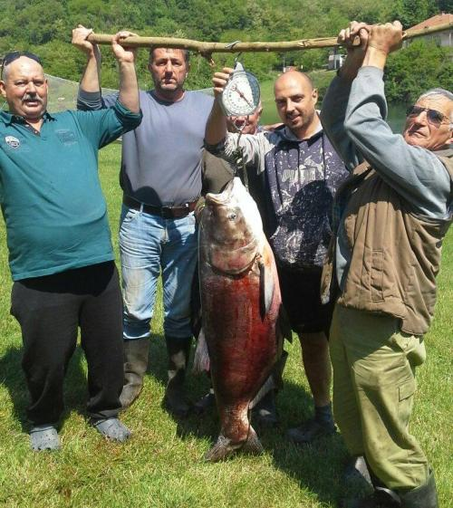 Ulov za pamćenje na Bovanskom jezeru - Tolstolobik od 40 kila