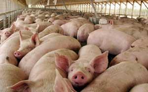 Srpski poljoprivrednici u zamci slobodnog tržišta