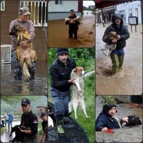 Помоћ и за животиње из поплава
