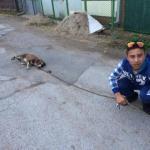 """Дечак који је злостављао пса, украо и """"југо"""" Центру за социјални рад"""