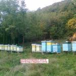Крађа на пчелињаку у Бовну