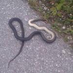 Виђена змија покрај спортског терена
