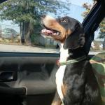 Nestao pas iz Aleksinačkog Rudnika