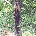 Богородица на стаблу дрвета