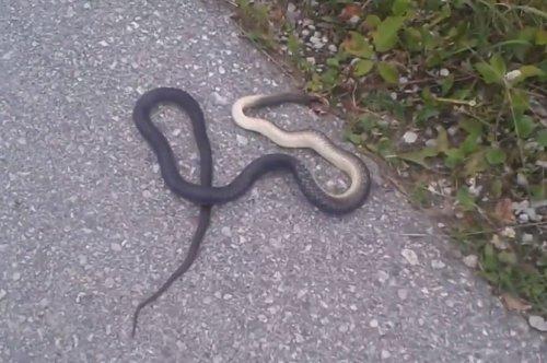 Viđena zmija pokraj sportskog terena
