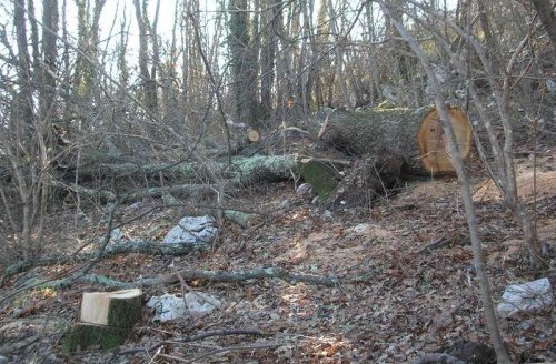 Organizovano krali drva