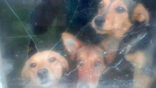 За напуштене кучиће три пута више него за двогодишње дете?