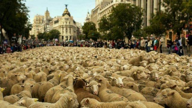 Miodrag Tasić: Basna o ovnu