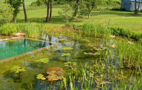 Шта су природни базени и како их направити