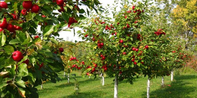 Субвенције за воћарску и виноградарску производњу