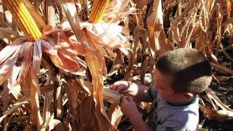 Тежак положај пољопривредника због суше, али и државе