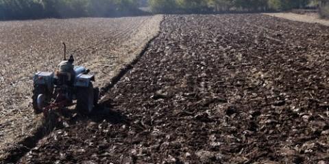 Izdavanje u zakup 300 hektara