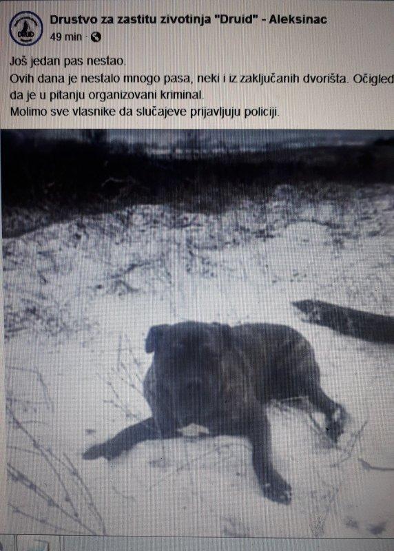 Нестанак паса у Алексинцу