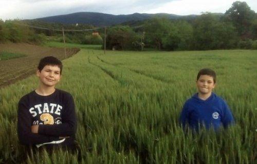 И Младенови синови воле ову производњу, а током лета помажу на фарми