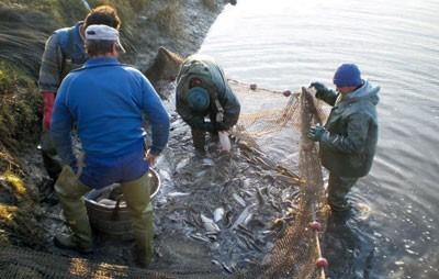 Рибокрадице ухваћене са пола тоне рибе