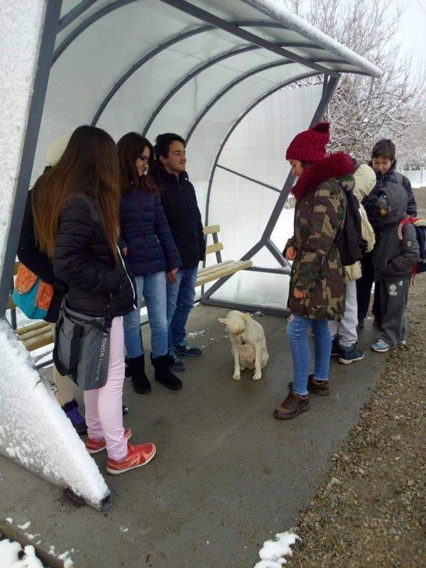 Zbog čega se ruši autobusko stajalište u Vukašinovcu